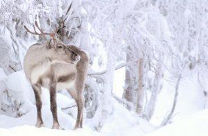 Vliegtijd Kuusamo